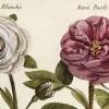 Fleurs en Lorraine