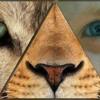 Festival Animal.es : Bestiaire de l'imaginaire