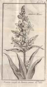 Traité historique des Plante qui croissent dans la Lorraine (...), par Pierre-Joseph Buc'hoz