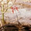 Ces plantes médicinales, toxiques et magiques qui soignent
